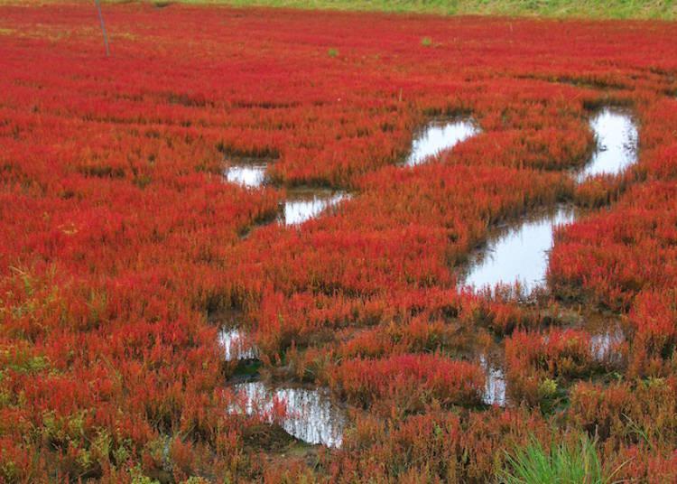 도토의 가을 풍경의 서사 산호초
