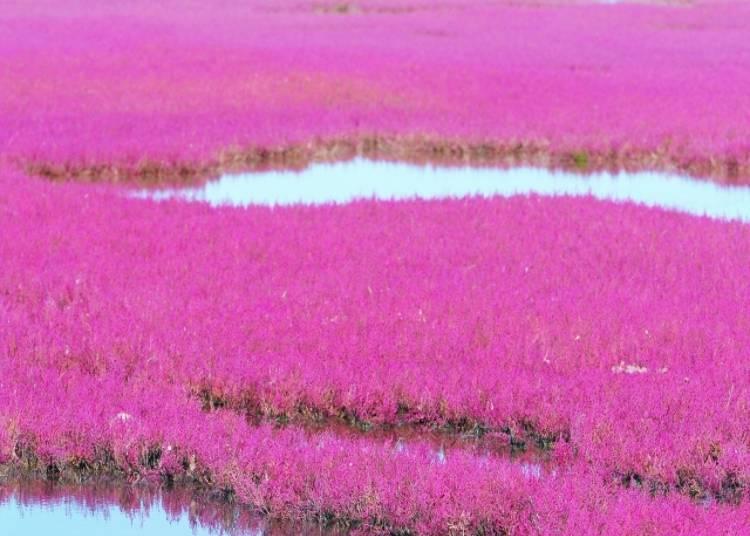 北海道珊瑚草景點④原始生態的自然美景「小向湖」