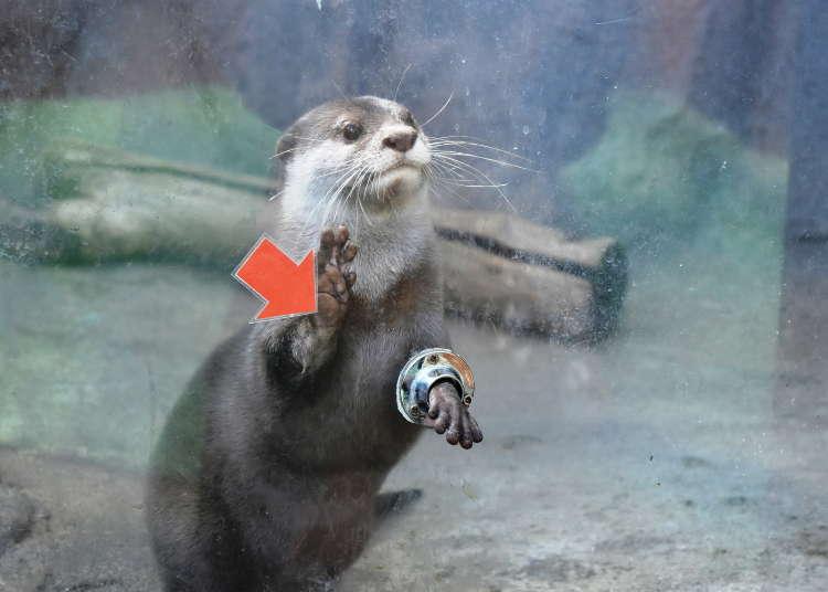 超体験型動物園「ノースサファリサッポロ」が日本一危険と話題!?【札幌】