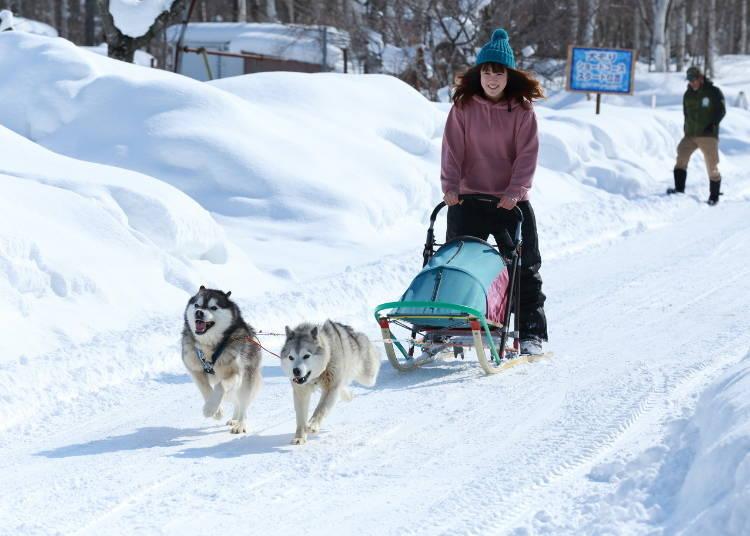 Winter Fun! Activities to Enjoy Year-Round at North Safari Sapporo