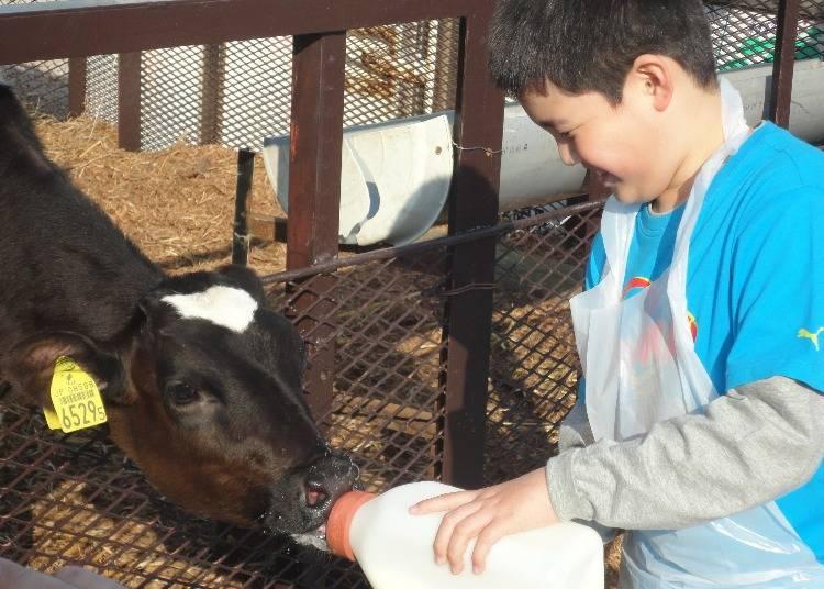 牧場の新鮮牛乳「あいす118」