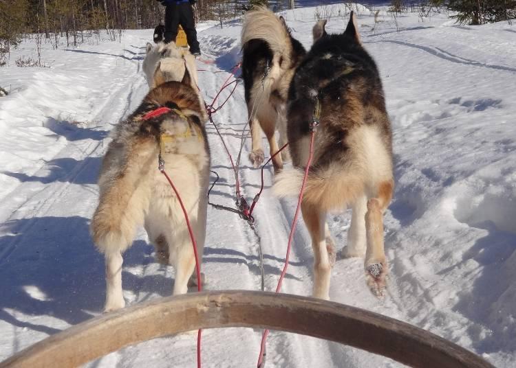 3. Dog Sledding: Dash through the snow on a four-dog open sled!