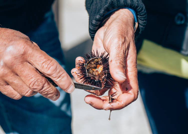 1. The awe-inspiring freshness of seafood at Rishiri Island!