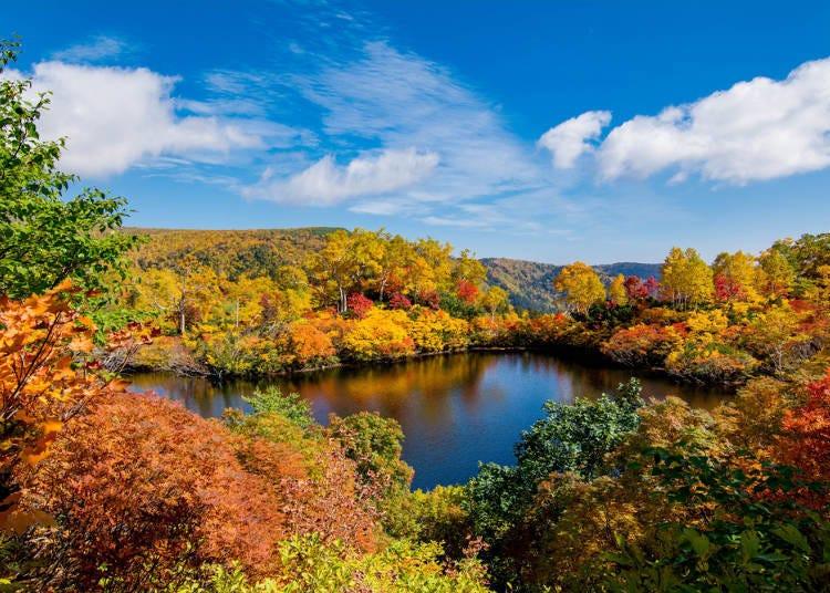 Hokkaido, full of surprises year-round!