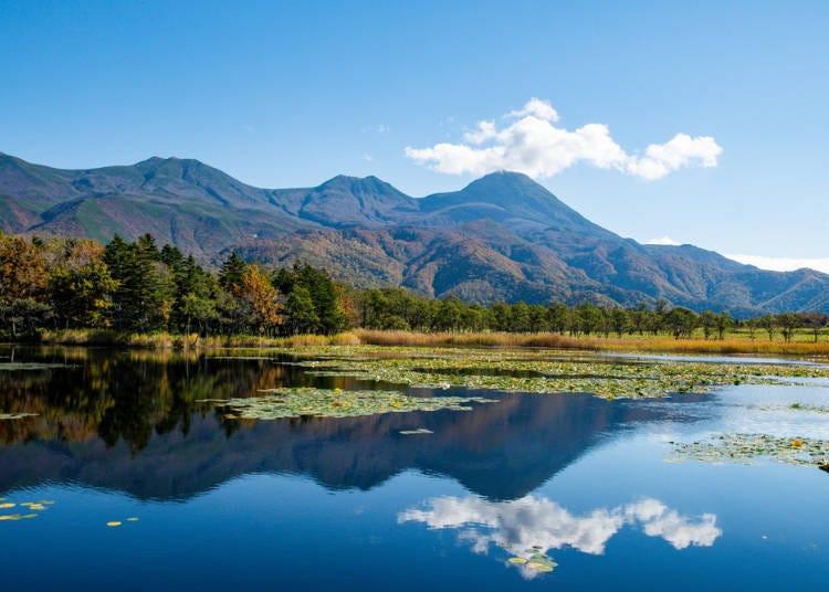 4.彷彿來到動物的樂園,知床的大自然景觀令人興奮不已!