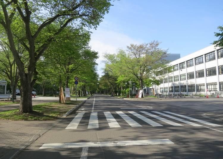 「北海道馬拉松」路線北側:名勝景點「北海道大學」校園