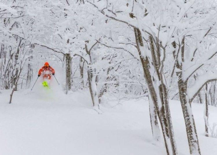 日本滑雪4大重點①想要感受粉雪&自然地形的人,可以這樣選擇