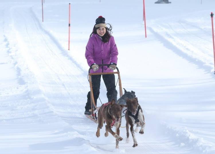 3. 人類和狗狗合為一體在滑道上奔馳「狗拉雪橇」