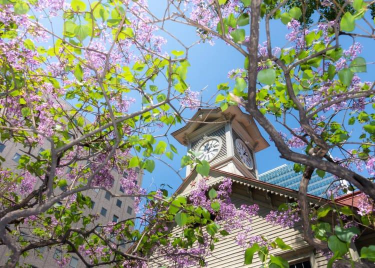 1. 홋카이도의 여름은 상쾌하고 쾌적하다