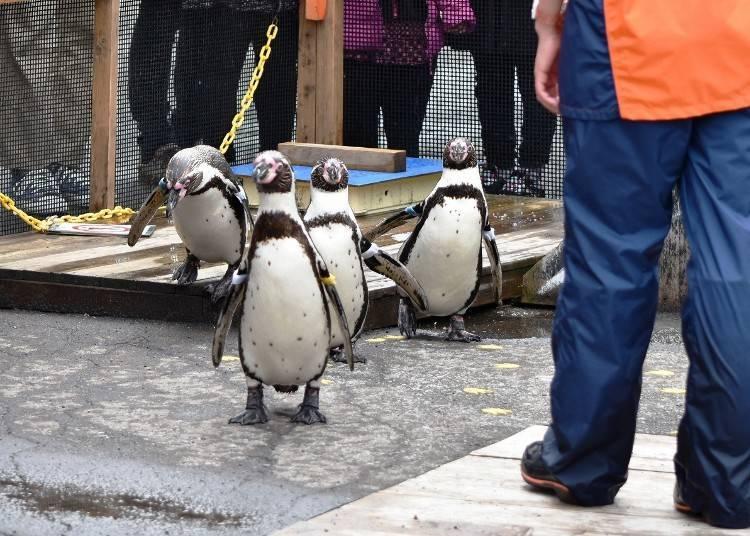 3. Fun shows at the Otaru Aquarium
