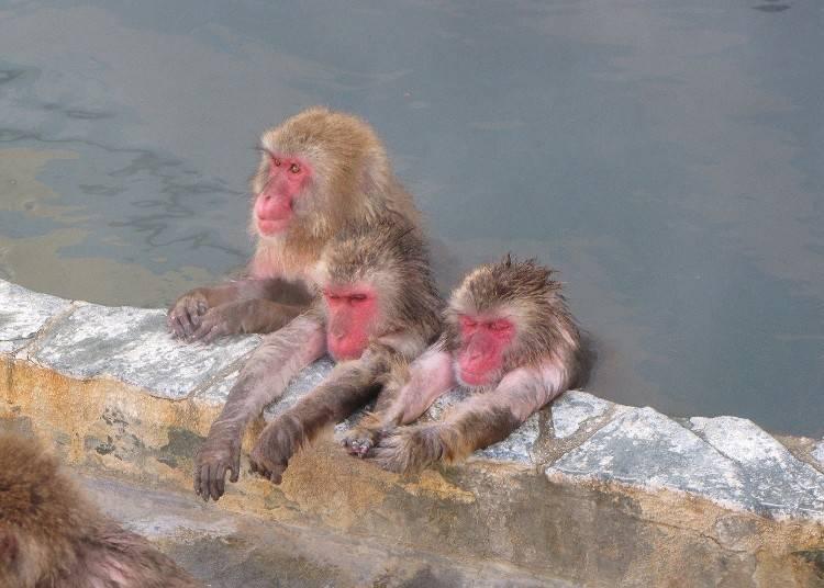4.「函館市熱帯植物園」で温泉に浸かったサルに会う