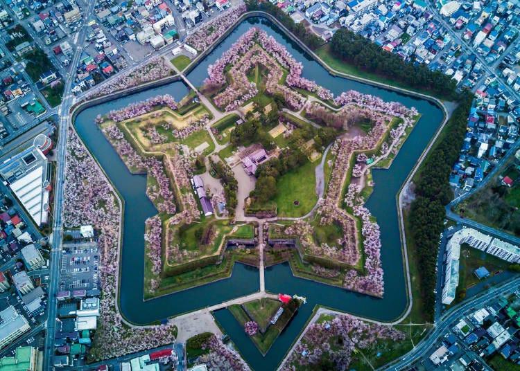 「고료카쿠 타워」에서 벚꽃이 아름다운 고료카쿠 공원을 내려다보자