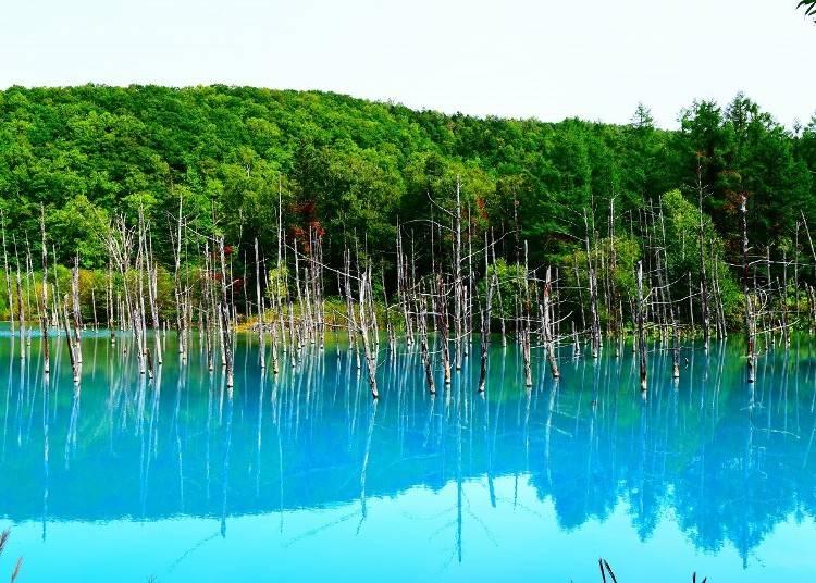 3.神秘的なビエイブルーに彩られた「青い池」を堪能する