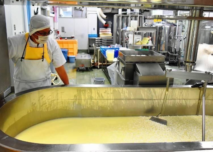 6. '후라노 치즈 공방'에서 치즈 만들기 체험