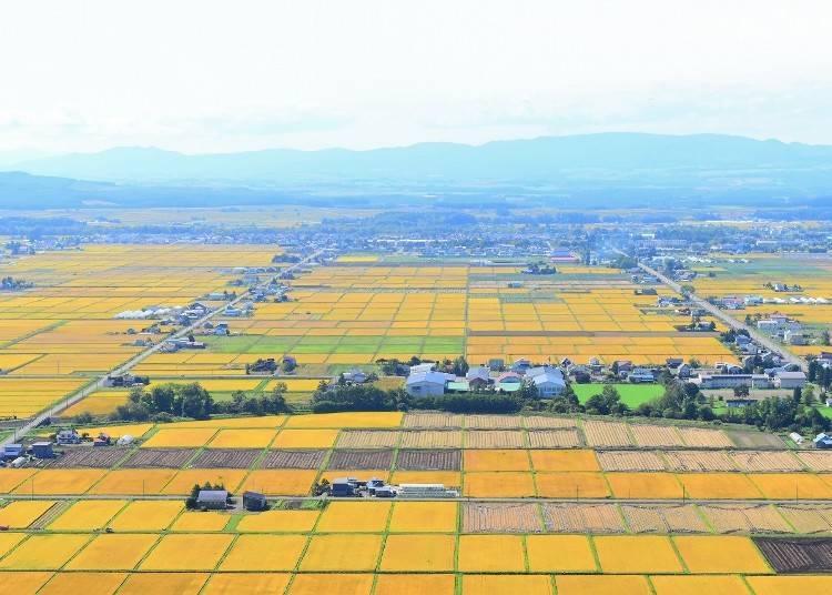 9. '기토우시 전망각'에서 감상하는 끝없이 펼쳐진 논 풍경
