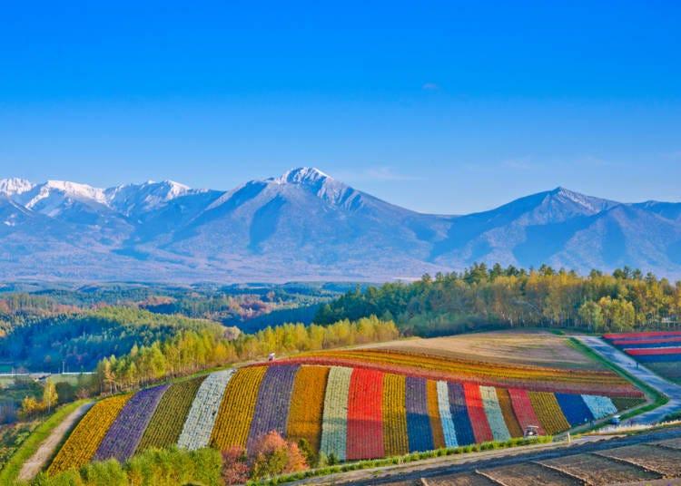 富良野、美瑛玩法5. 在「拼布之路」享受宛如歐洲的風景