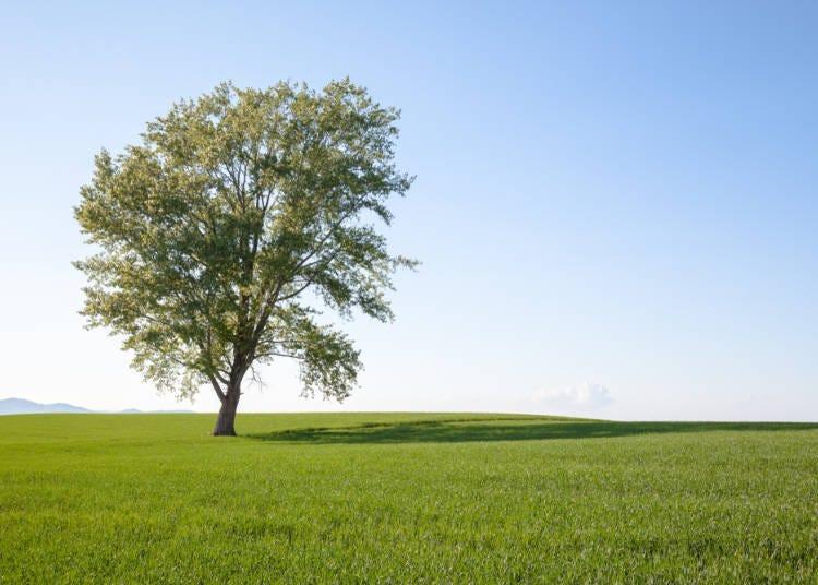 為了能永遠欣賞到富良野、美瑛的美景,必須要注意!