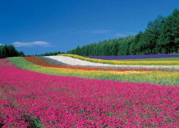 홋카이도 여름여행 - 6~8월이 시즌인 꽃구경이 가능한 9곳