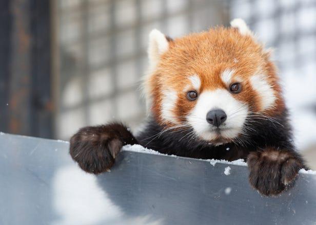北海道・旭川をめぐる4泊5日モデルプラン!旭山動物園に大雪山、旭川ラーメンも