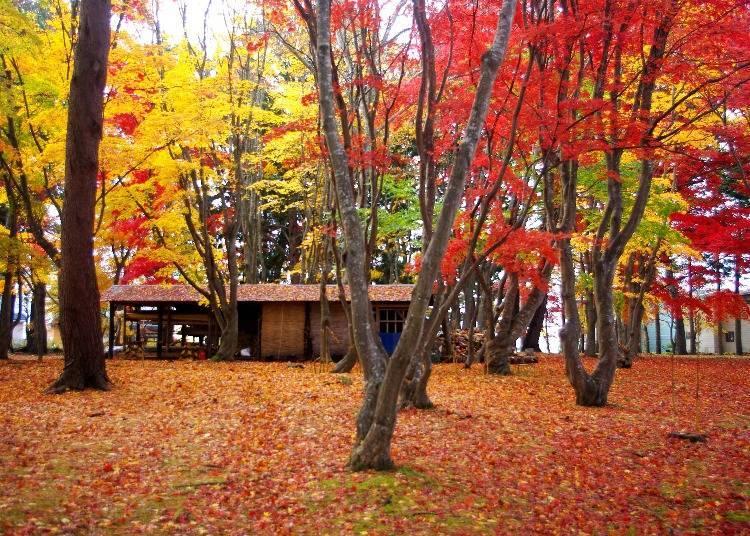 2. Kōsetsuen: Where You Can Enjoy Fall Foliage at Night Too!