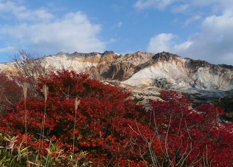(5)まるで真紅の絨毯!「恵山」