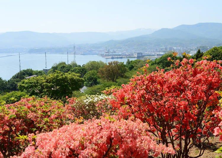 北海道道央紅葉景點④位於小樽山丘上的「手宮公園」(小樽)