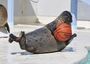 Ultimate Guide to Otaru Aquarium: Cute Penguins, Friendly Seals, and More!