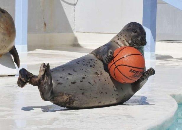 小樽水族館玩樂懶人包:交通方式、門票費用、表演體驗、必買紀念品推薦