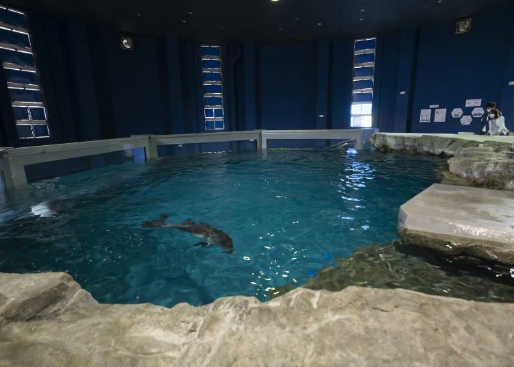 ネズミイルカが泳ぐ「ほのぼのプール」