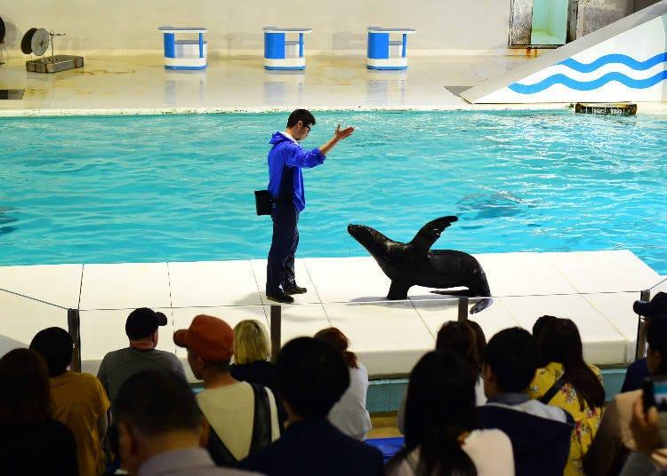 イルカとオタリアのショー