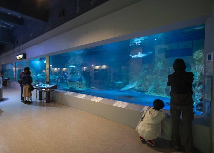 小樽水族館看點①小樽水族館最大的水槽!「廣景水槽」