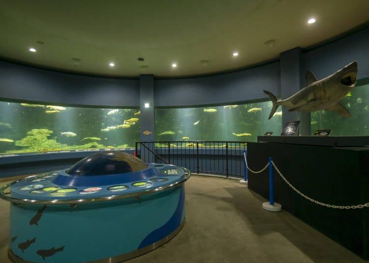 小樽水族館看點④360度的水槽!「鄂霍次克海・白令海」