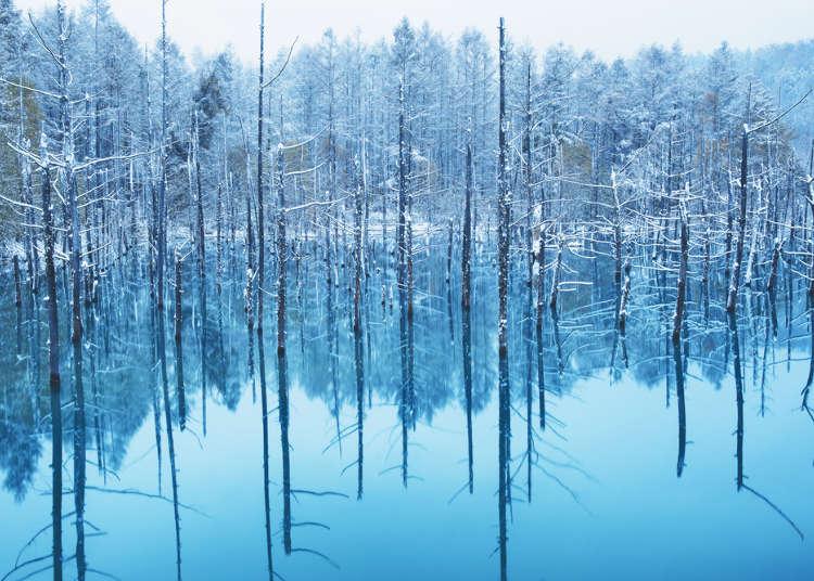 なんて神秘的!北海道・美瑛の人気スポット「白金青い池」、写真映えポイントは
