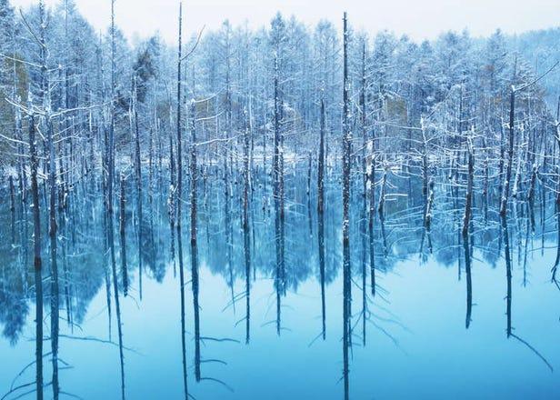 홋카이도 비에이 '시로가네 아오이이케'를 즐기는 방법과 사진촬영 팁!
