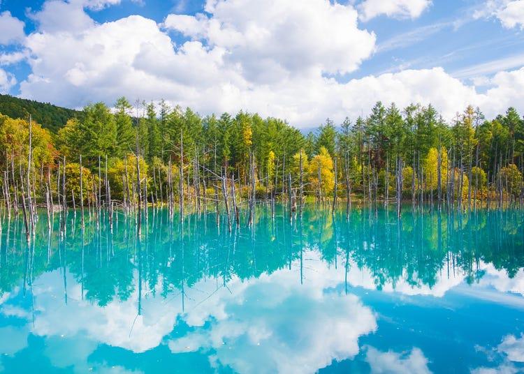 Hokkaido's Shirogane Blue Pond: Top Tips For Visiting Biei's Mystical Spot