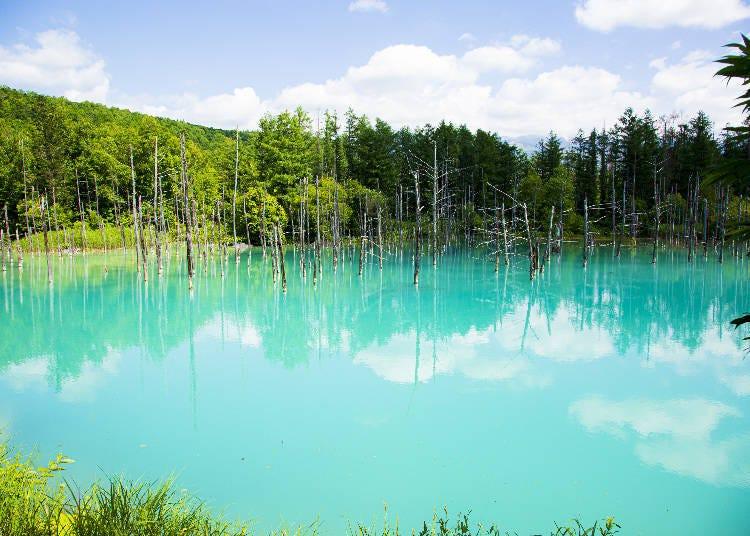 「白金青い池」はなぜ青い?