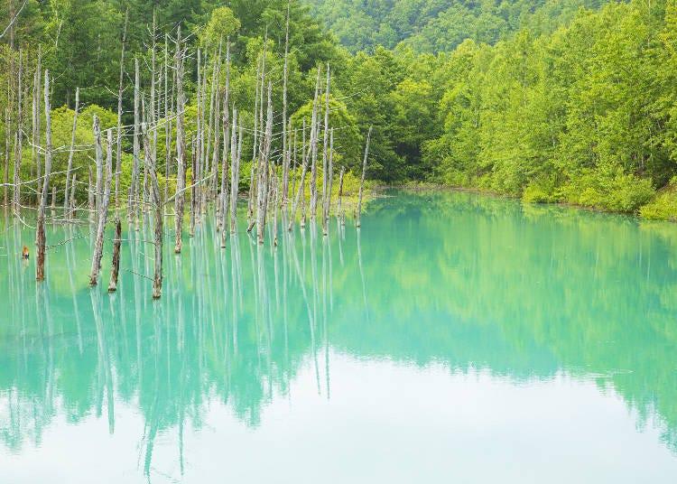 早朝(7:00)の青い池