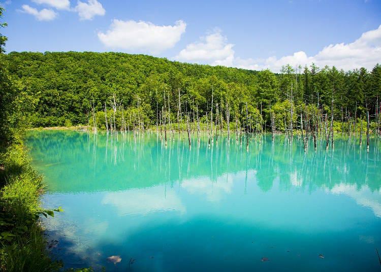 昼(13:00)の青い池