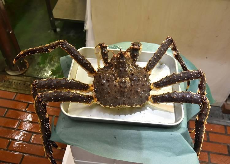 北海道螃蟹種類①帝王蟹(茨蟹、油蟹):11月~12月左右