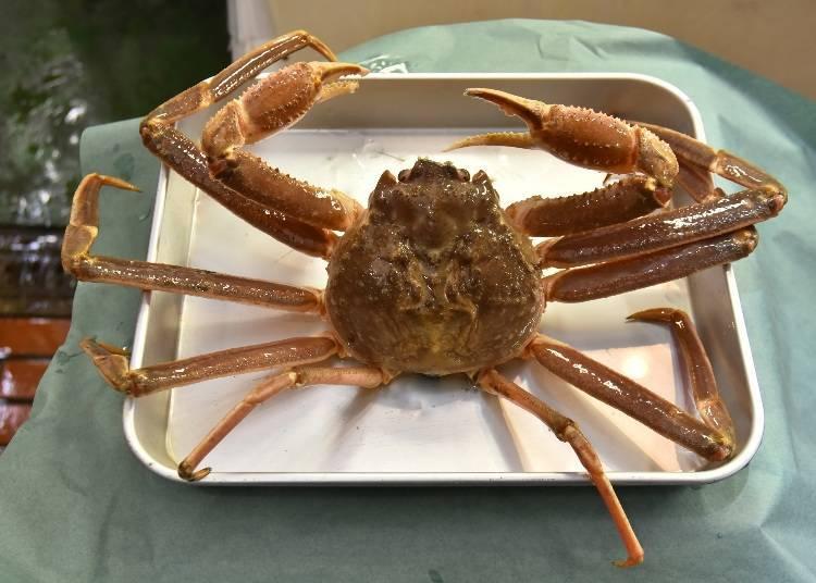 螃蟹種類②松葉蟹:3月~7月