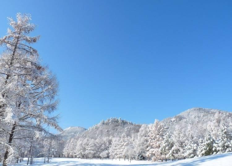 富良野スキー場へのアクセス方法は?