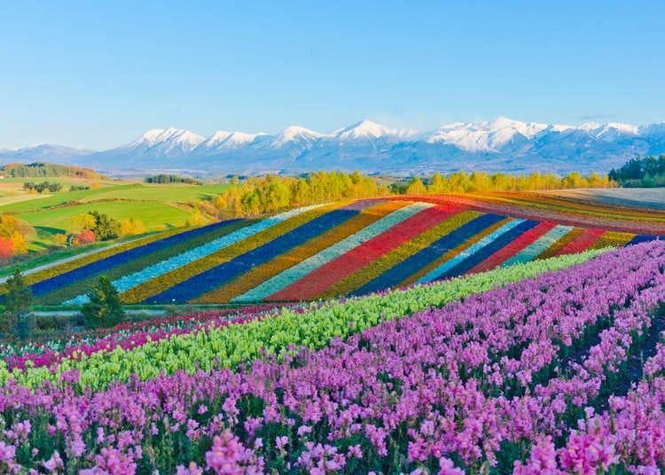 【2020最新排行】真的好想去旅行!日本人最想旅行的地區大公開