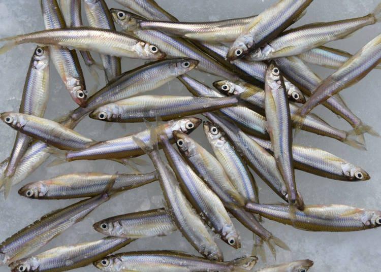 5 北海道冬天的風情  在湖泊體驗垂釣西太公魚