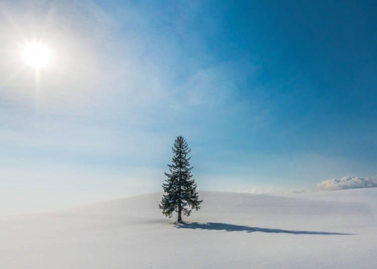 來自沒有海也不下雪的國家遊客對一切都感到吃驚
