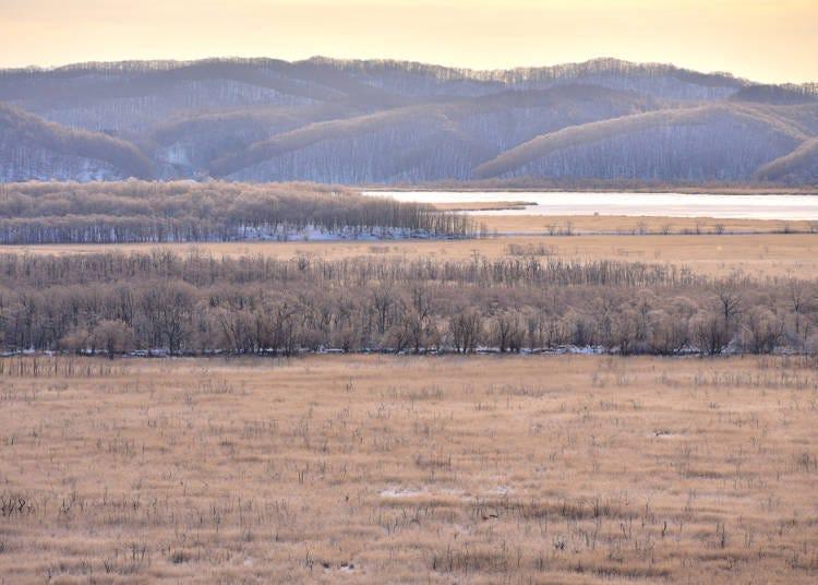 5. One-day tour around Kushiro Marshland in winter