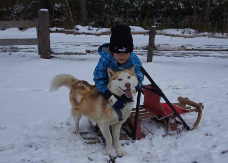 4. 삿포로 시내에서 개썰매 체험 & 눈의 놀이기구 놀이