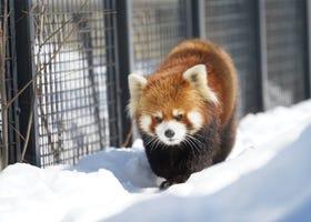 札幌冬天必玩10項體驗!玩雪、燈飾、溫泉應有盡有