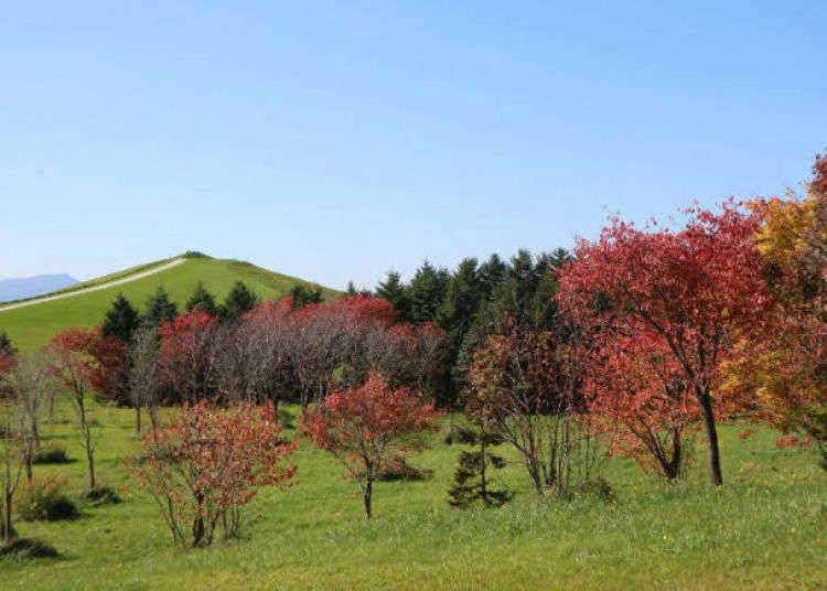 Moerenuma Park: Isamu Noguchi's Stunning Living Sculpture
