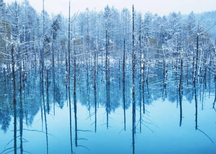天堂般的神秘美景~美瑛「白金青池」