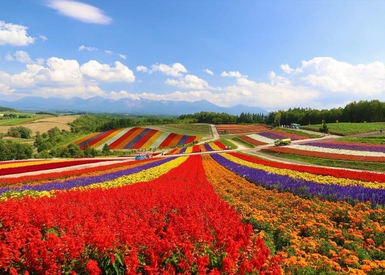 奔向極北的大地!北海道最佳住宿設施、各類飯店、溫泉旅館推薦